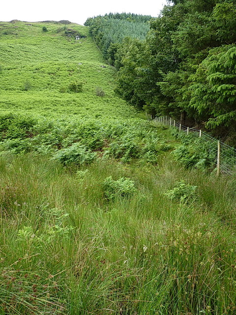 Edge of forest block above Hafod Fudr