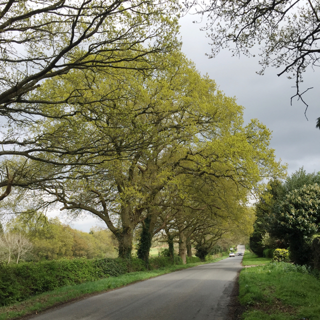 Spring comes to Table Oak Lane, Honiley