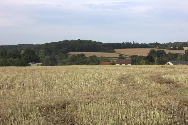 Field between Hall Farm and Little Stud Farm
