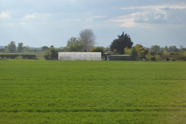Polytunnel, New Farm