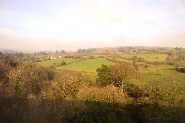 Storridge Woodland