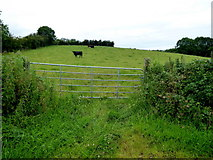 H6056 : Gate to field, Sess by Kenneth  Allen