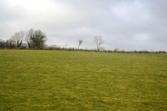 Devon Pasture