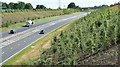 J3194 : Road landscaping, Lismenary, Ballynure - July 2017(1) by Albert Bridge