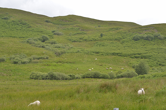 Grazing near Ardconnel