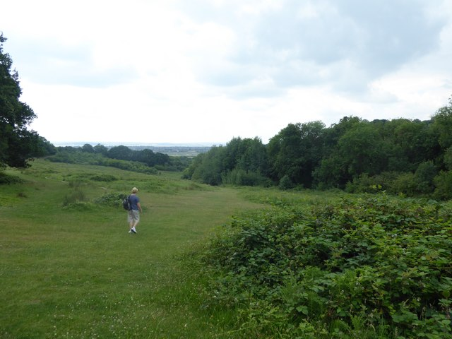 Path in Hadleigh Country Park