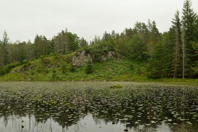 Water Lilies on Loch an Ruighein, Duartmore Forest, Sutherland