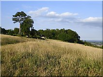 TQ1450 : Meadow at the crest of the North Downs scarp, Ranmore by Stefan Czapski