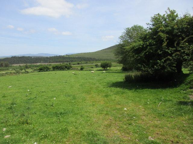 Grassland below Knockmeal