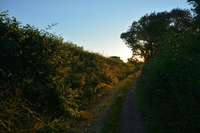 Mid Devon : Quarry Lane
