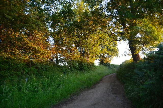 Mid Devon Lammacott Lane