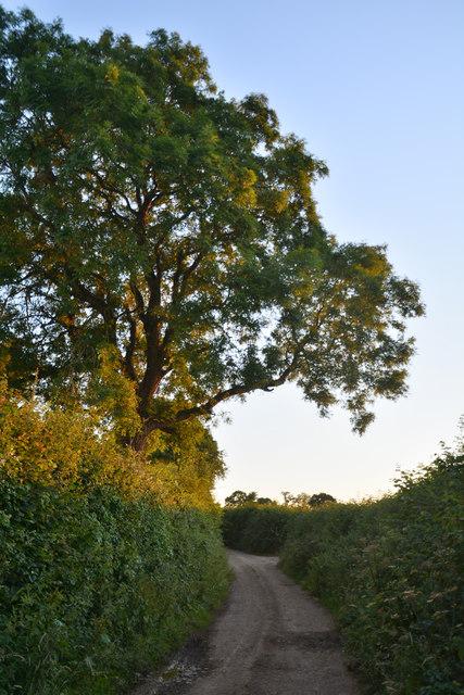 Mid Devon : Lammacott Lane