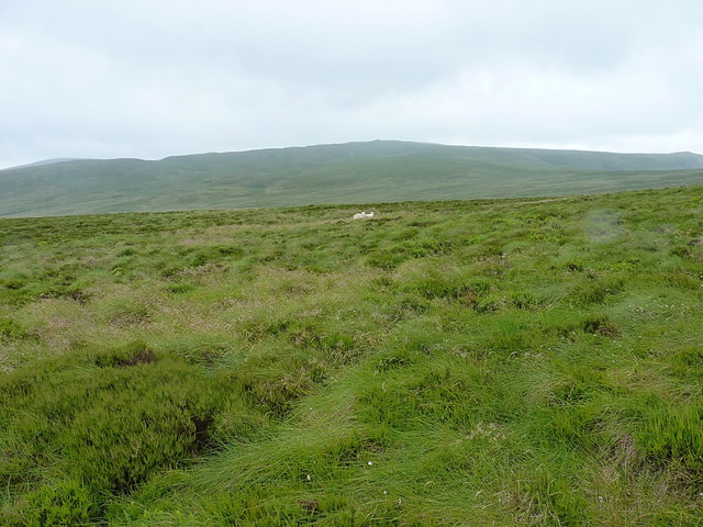 Sheep on Blaen Hirddu-Fawr
