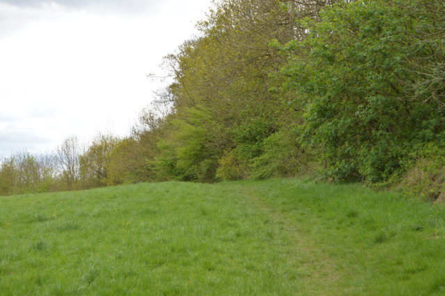 Woodland edge, Barn Hill Open Space