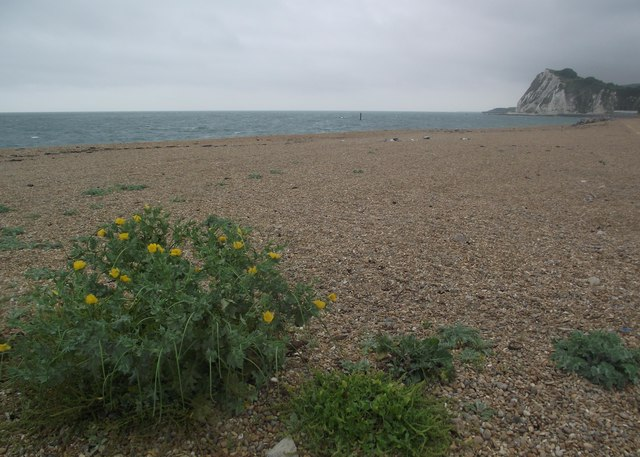 Shakespeare beach