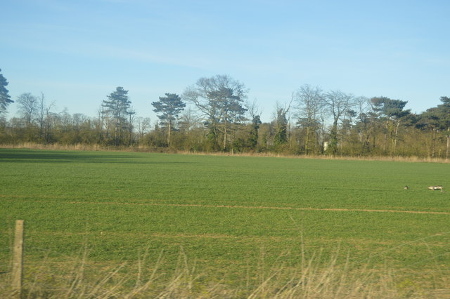 Field by Guided Busway