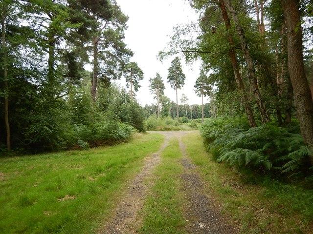 Woodland Track near Swinley Road