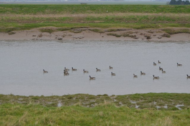 Geese on the Great Ouse