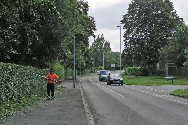 Cherry Hinton Road: hedge-trimming