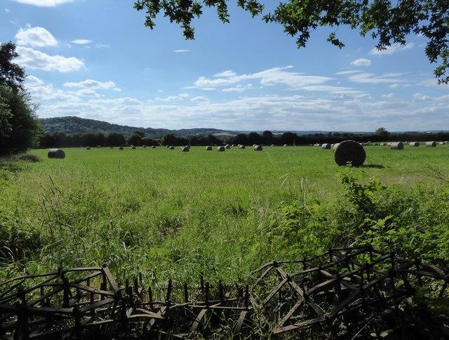 Farmland east of Selborne