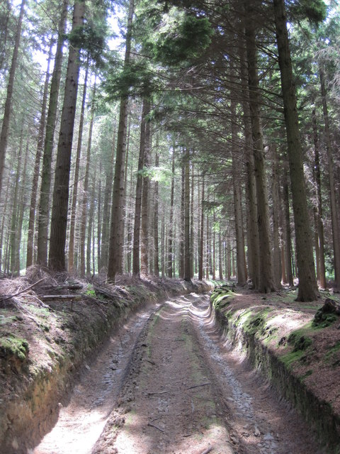 Bridleway through Newton Woods