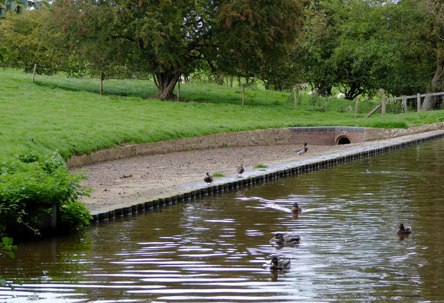 Canal overflow with ducks