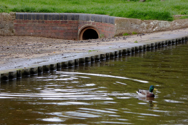 Canal overflow with duck
