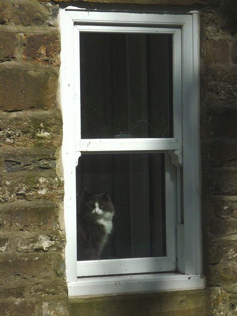 Watching cat, Ireshopeburn