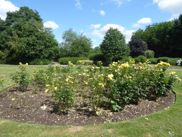 Roses in Durants Park