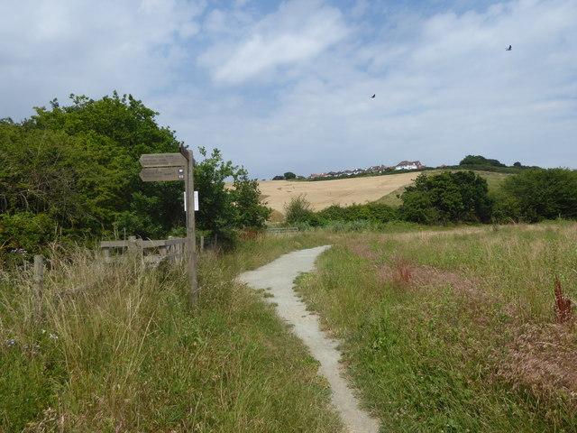 On the Saffron Trail
