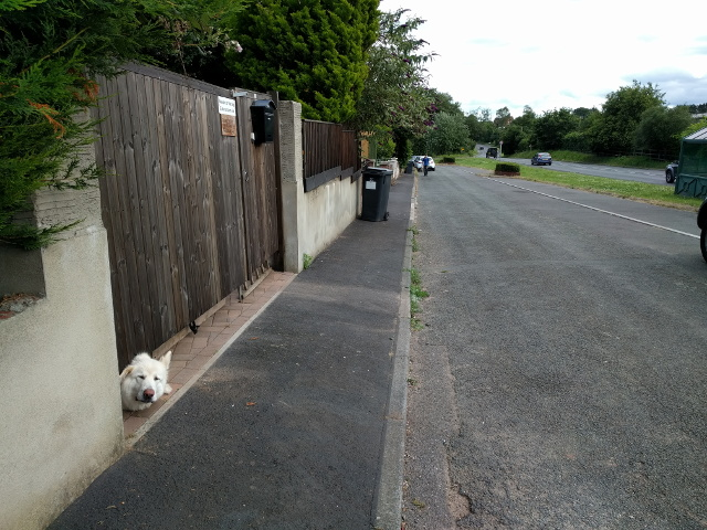 Dog looking under a gate, next to Exeter Road, looking south