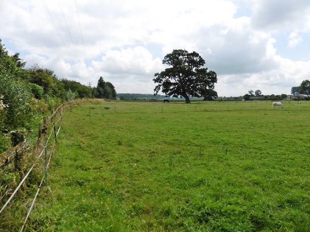 Equine pasture