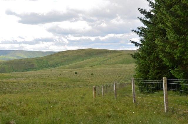 Edge of Craig Douglas Forest