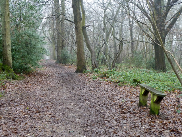 Broad Walk, Selsdon Wood