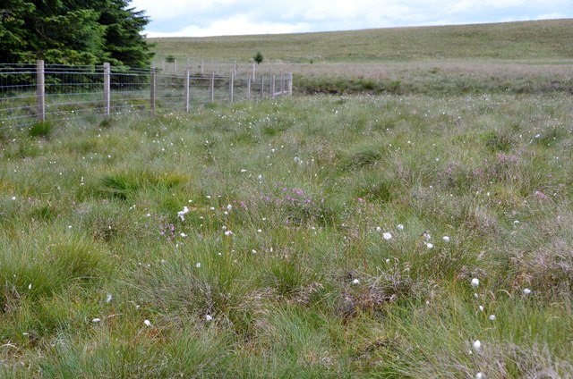 Boggy moorland with cotton grass