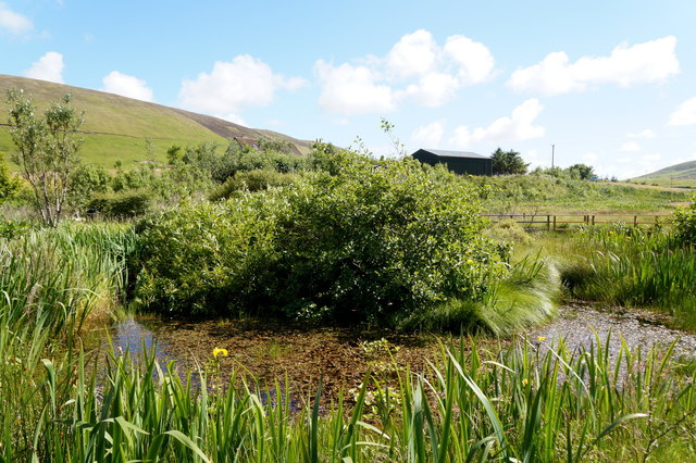 The pond at Sandgarth, Voe