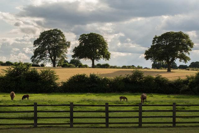 Horse fields near Nook Farm