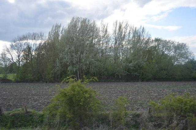 Woodland near Milton
