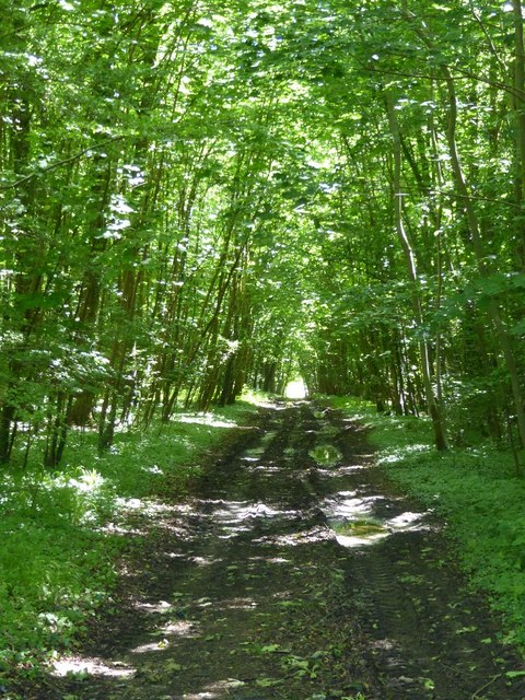 Woodland track and footpath