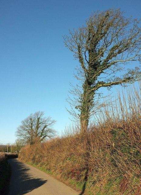 Lane north of Treveighan