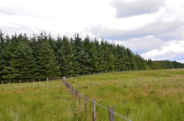 Fence and forest corner, Craig Douglas Forest
