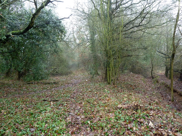 Wooded belt, Selsdon