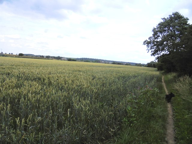 Footpath Alongside Ripening Corn in the Went Valley