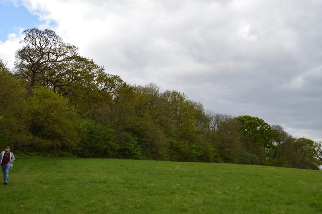 Woodland, Barn Hill Open Space