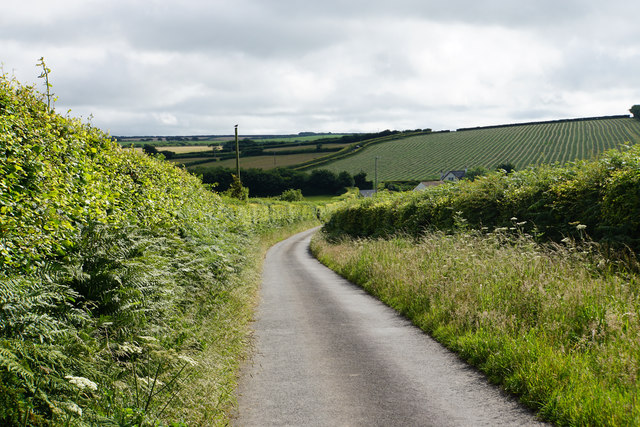 Lane to Caffyns Cross