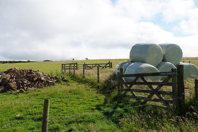 Silage bales below Caffyns Heanton Down