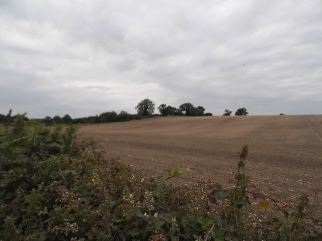 Field by Gaddesden Lane