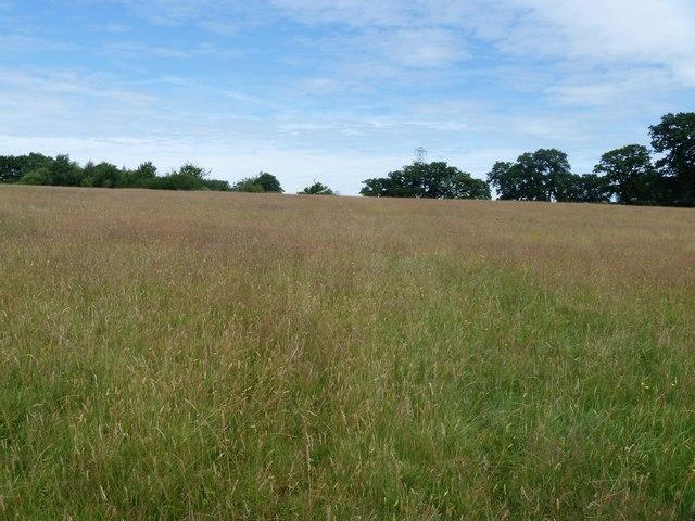 Through the meadow [2]