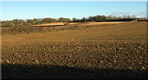 SX0777 : Arable farmland at Trevenning by Derek Harper