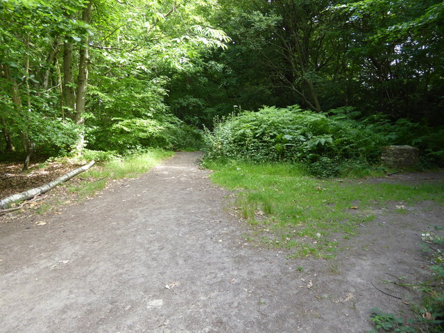London Countryway in Surrey (7)